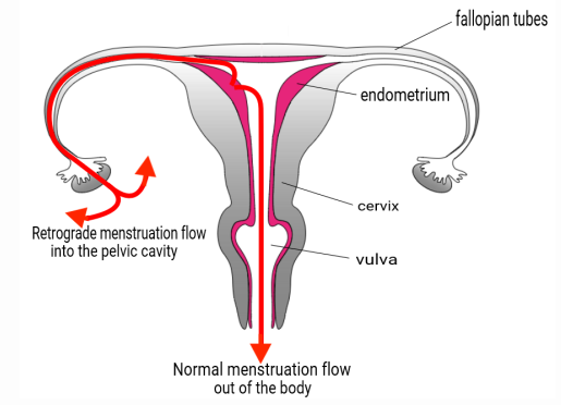 blood flow in periods